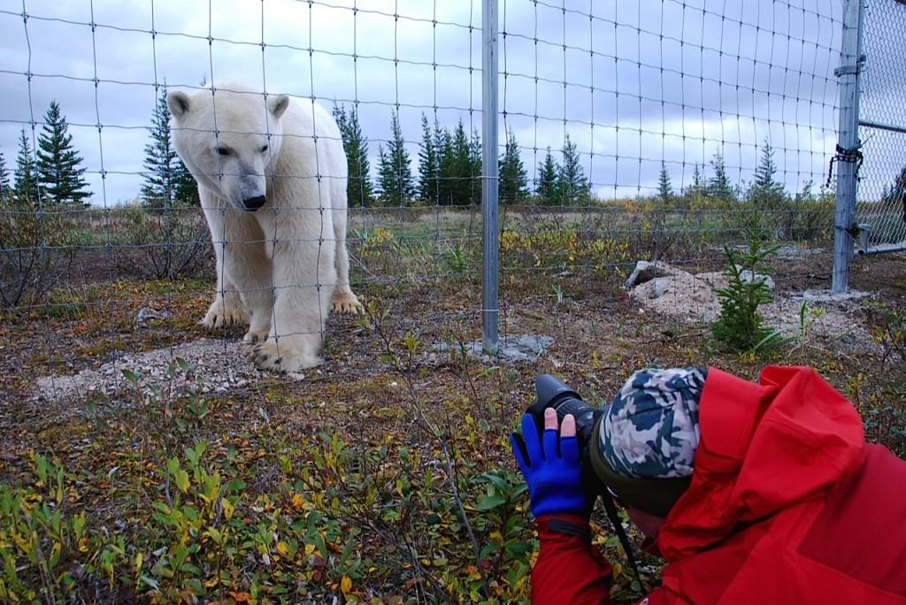 Hudson Bay: Auf Augenhöhe mit  Eisbären - out-of-canada.olehelmhausen.de