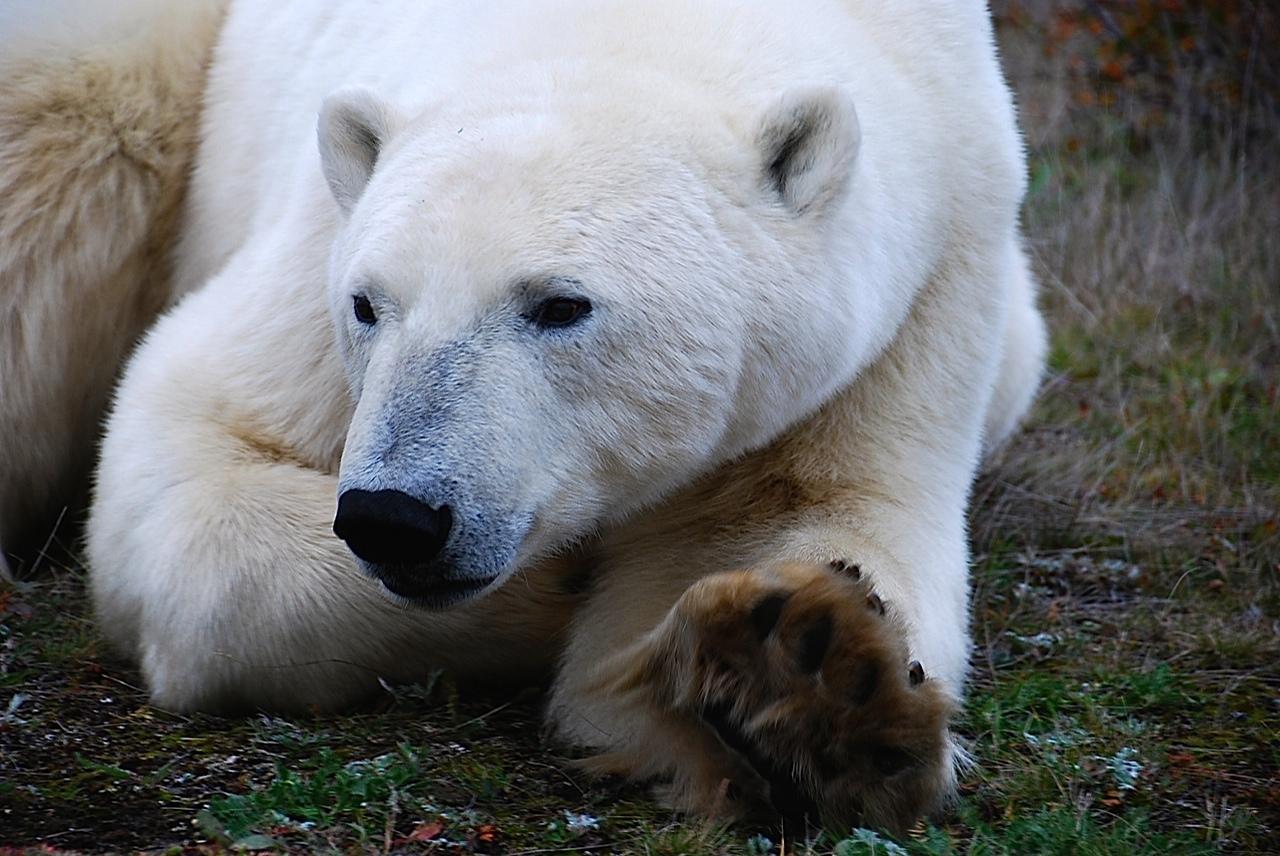 Bei den Eisbären der Hudson Bay, Manitoba › Out of Canada