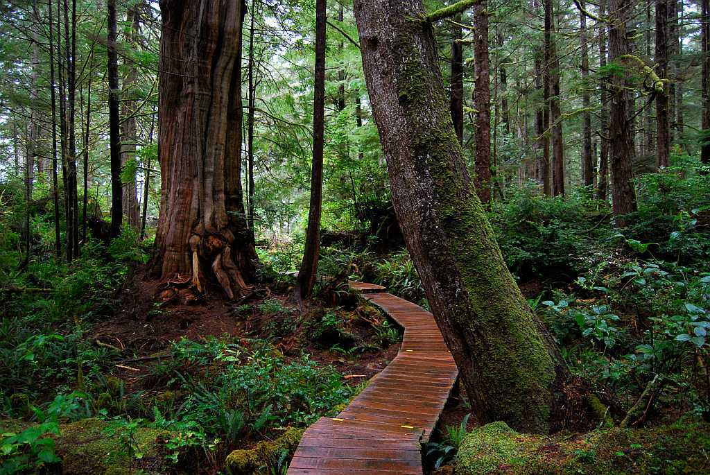 Vancouver Island Kanada - Im Einbaum zur Regenwald-Apotheke - out-of-canada.olehelmhausen.de - 1