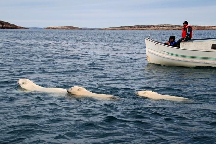 Mein Arktis-Abenteuer (3/4): Die Eisbärin und die Knochenstätte - 3