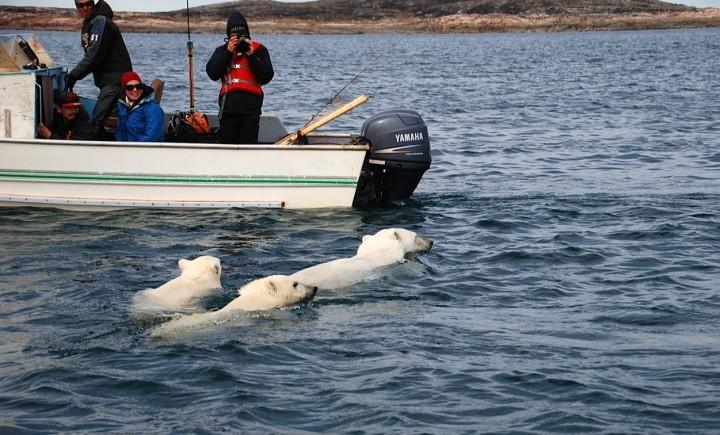 Mein Arktis-Abenteuer (3/4): Die Eisbärin und die Knochenstätte - 1
